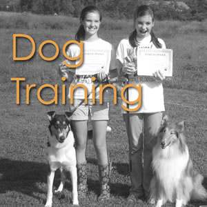 Dog Training Lessons